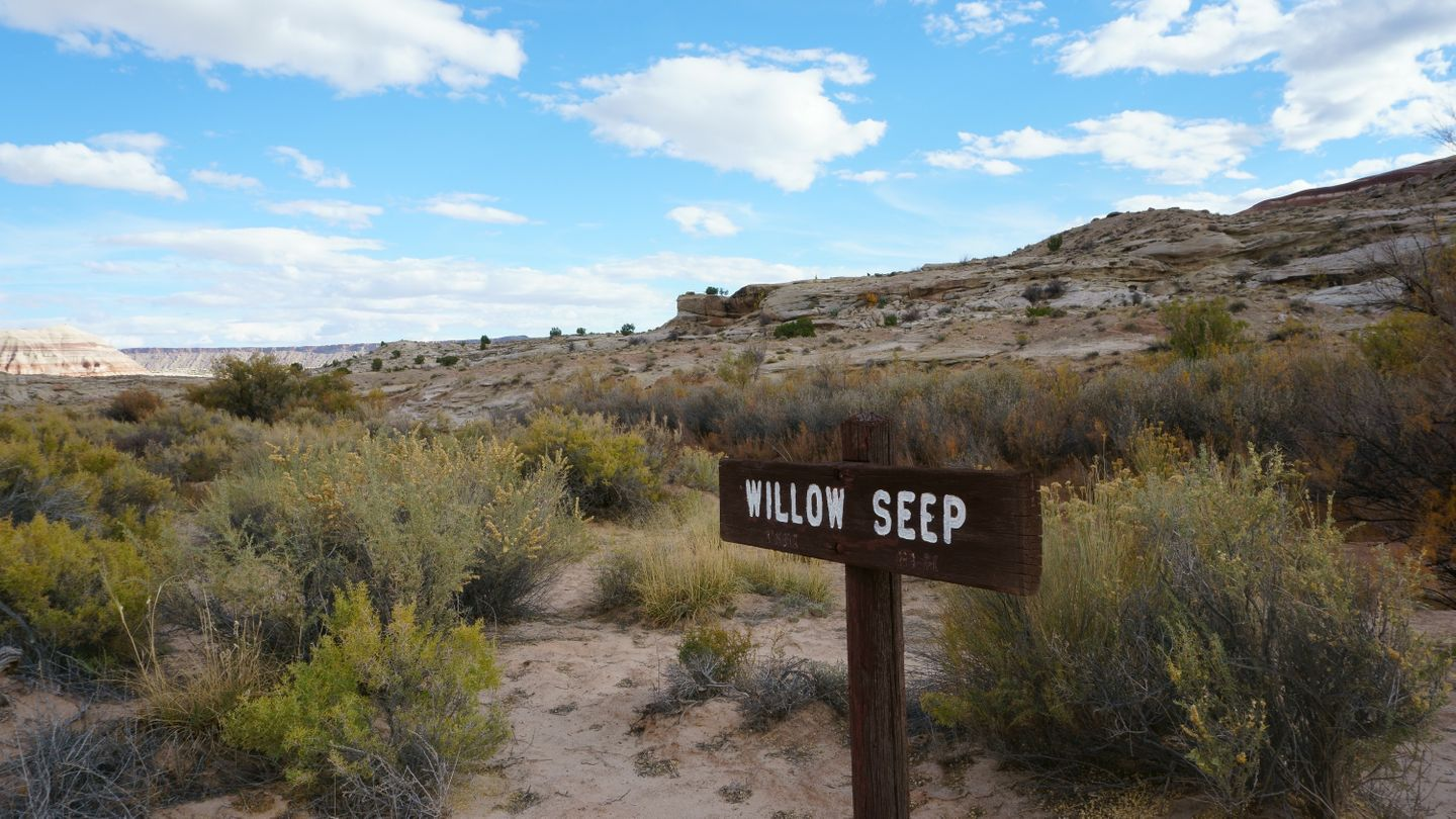 Cathedral Valley Loop - Waypoint 27: Willow Seep