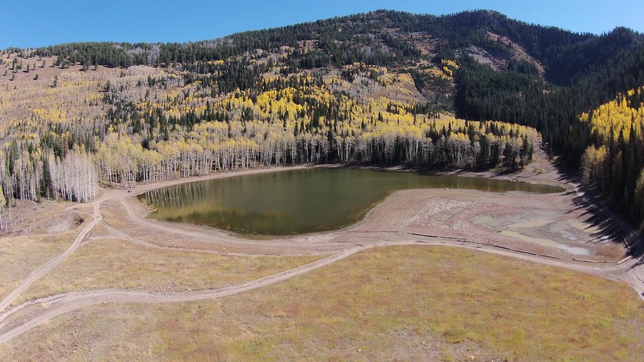 Highlight: Forest Lake