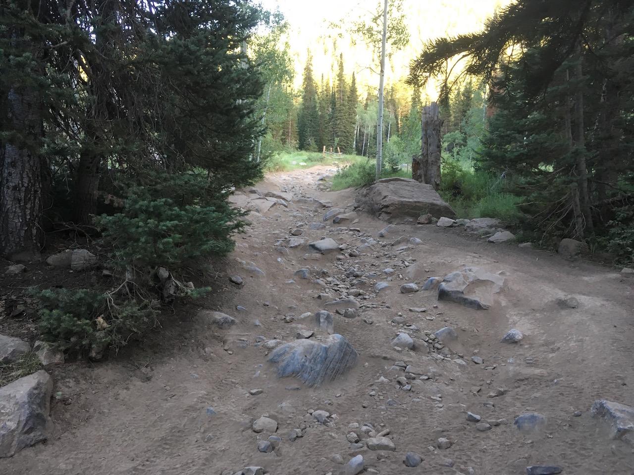 Forest Lake - Waypoint 5: Second Rock Garden