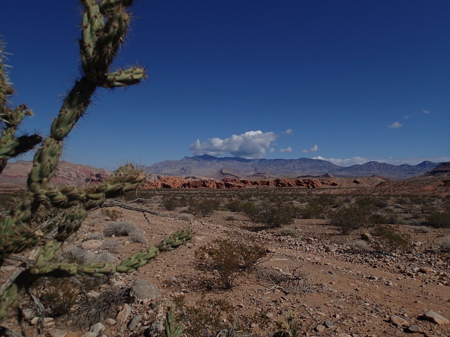 Highlight: Gold Butte Backcountry Byway