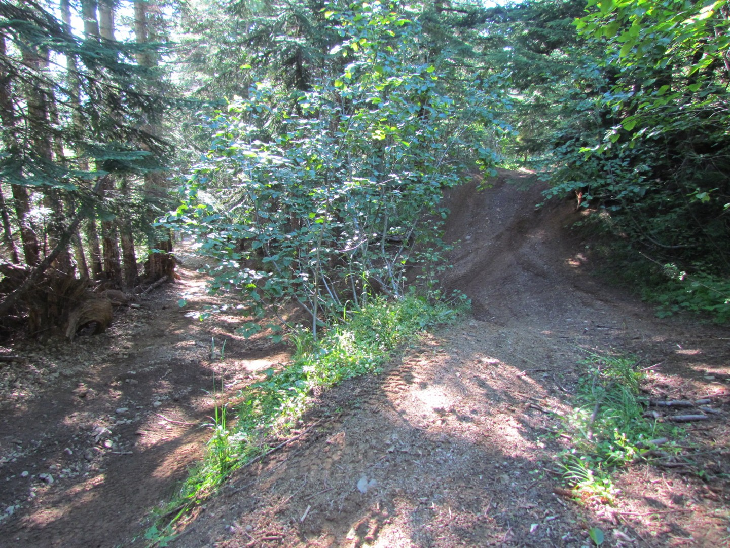 Evans Creek / Trail #519 - Waypoint 6: Trail Intersection / bypass (519-A)