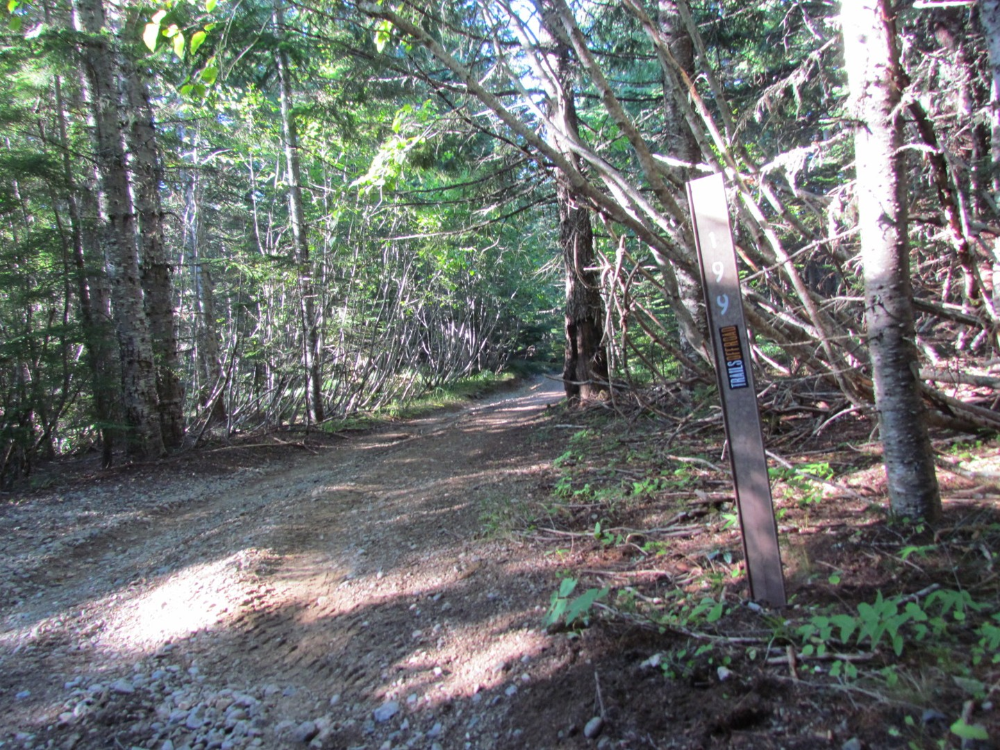 Evans Creek / Trail #519 - Waypoint 9: Trail Intersection / #199 / Straight