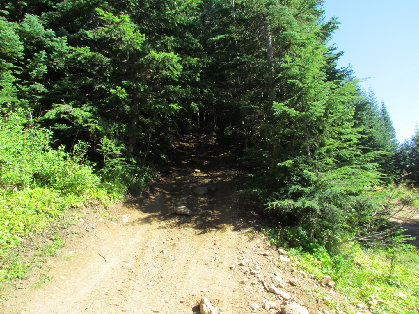 Evans Creek / Trail #519 - Waypoint 3: Intersection / Turn Right