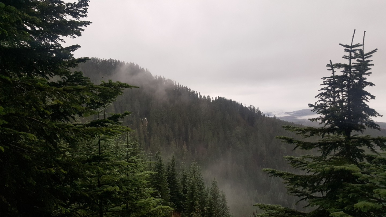 Evans Creek / Trail #519 - Waypoint 5: Evans Creek Ridgeline