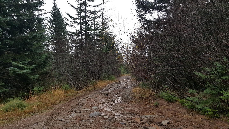 Evans Creek / Trail #519 - Waypoint 8: Playground Clearing