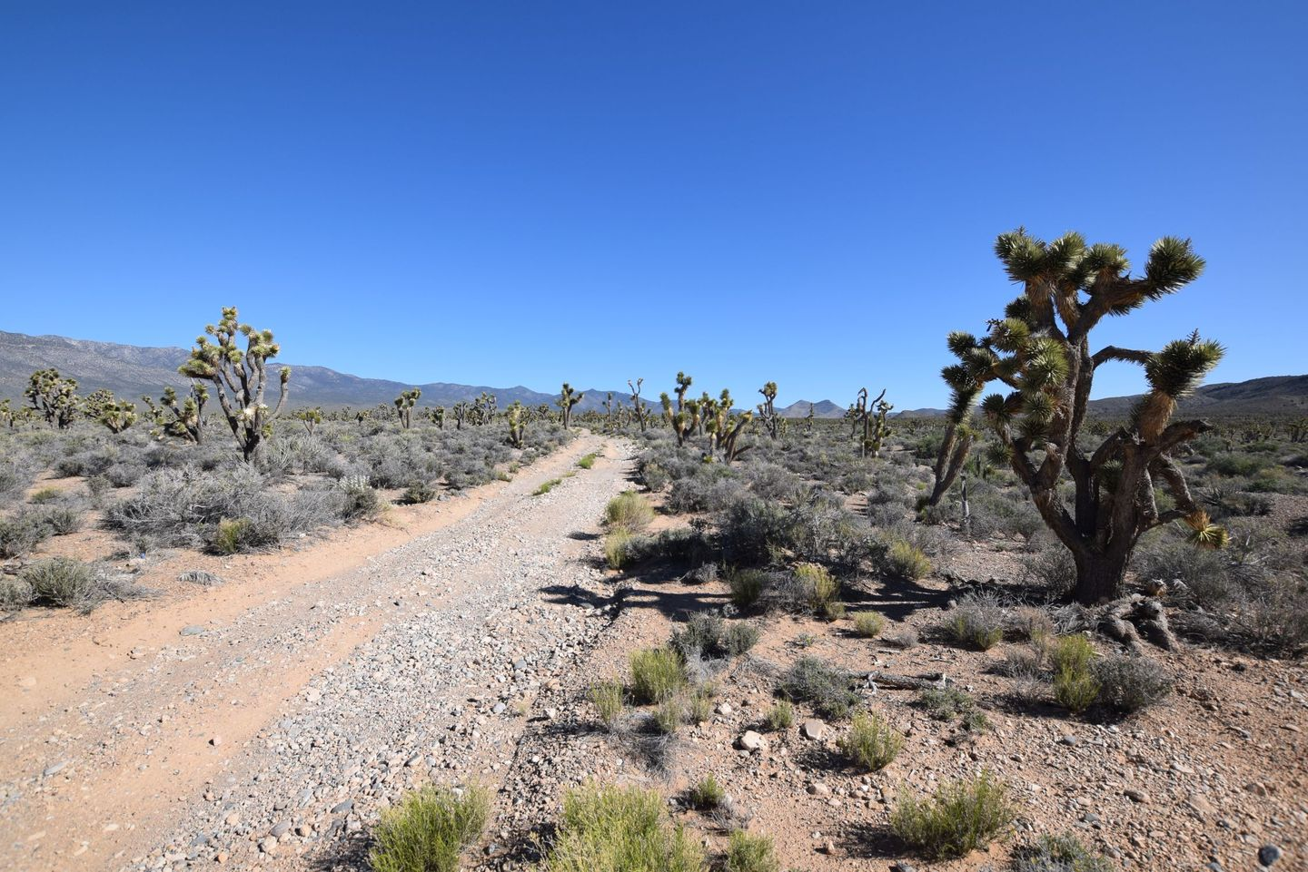 Trail Review: Pine Nut Road