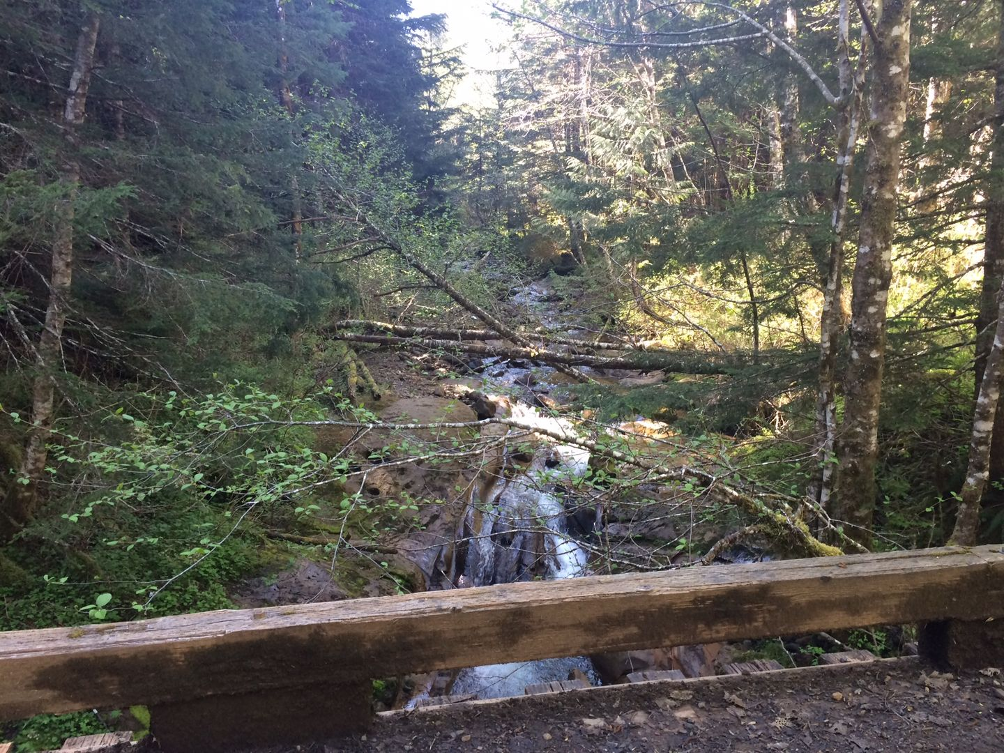 Evans Creek / Trail #102 - Waypoint 2: Bridge