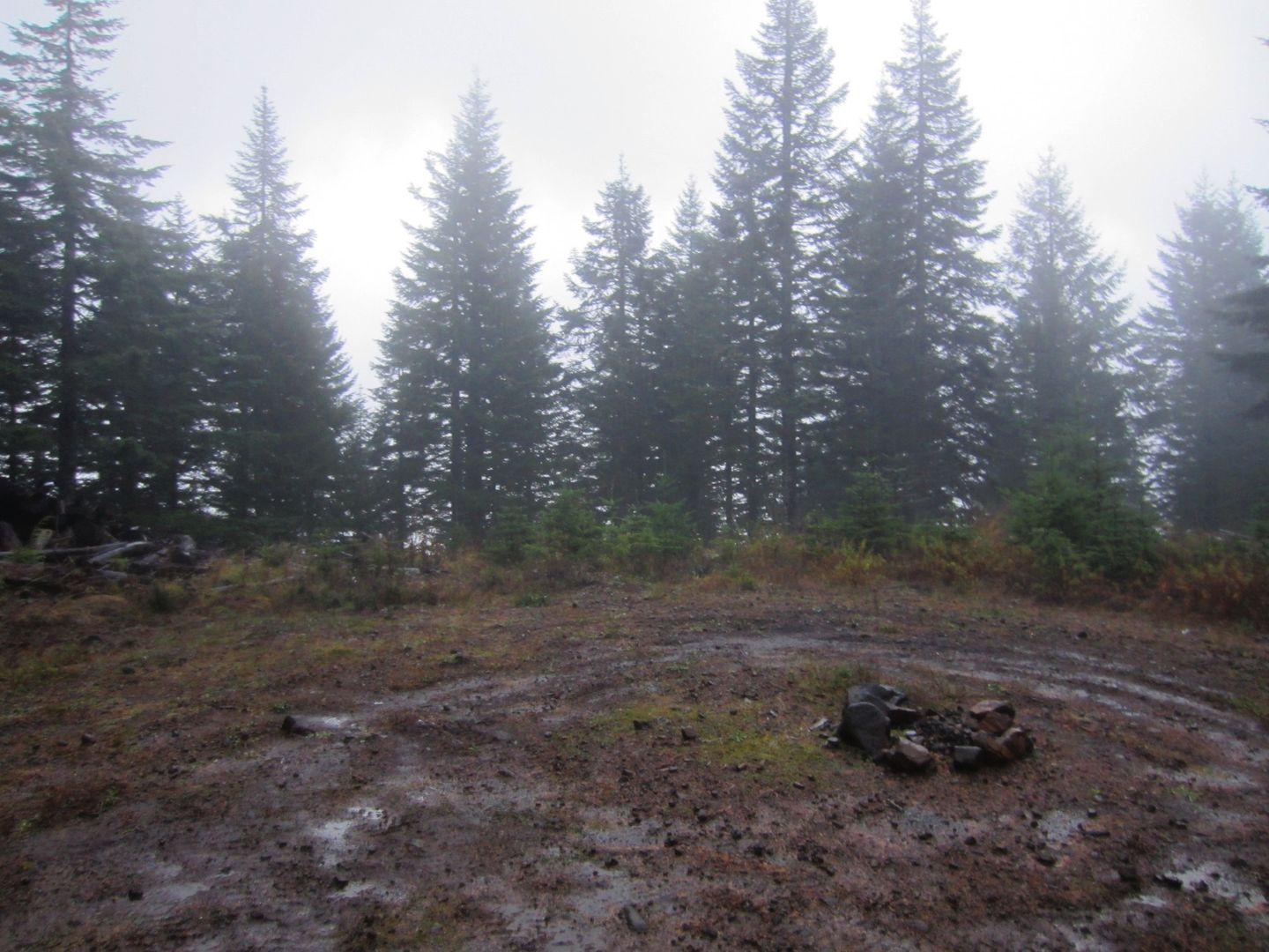 Camping: Firebreak Five / Tillamook State Forest