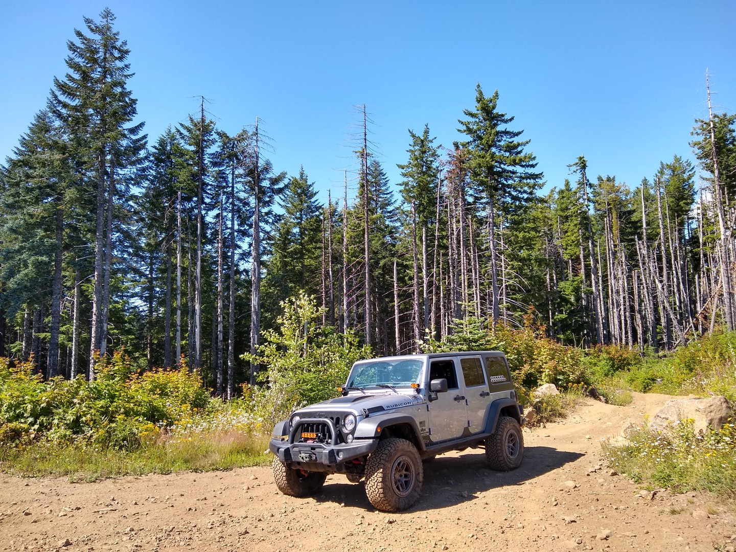 Trail Review: Firebreak Five / Tillamook State Forest