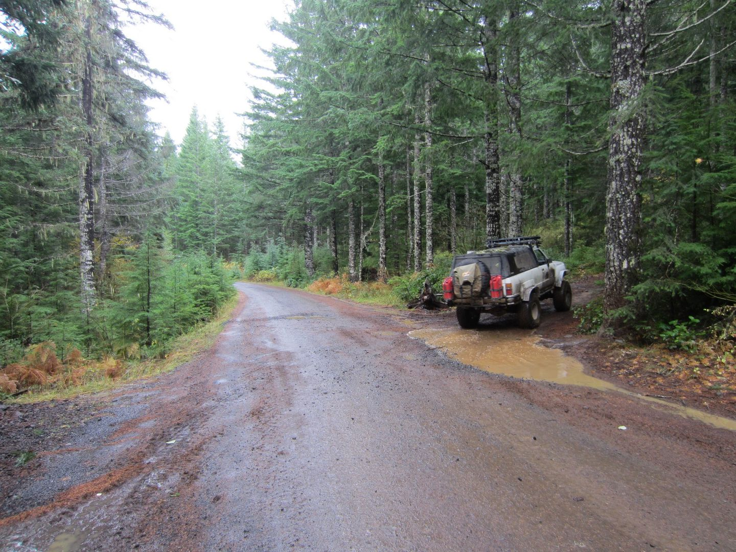 Firebreak Five / Tillamook State Forest - Waypoint 6: Go Left and Then Immediately Right Across Gravel Road