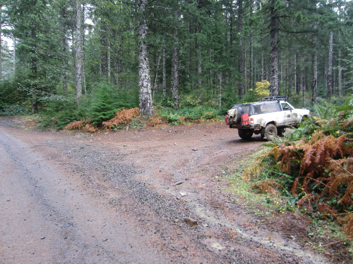 Firebreak Five / Tillamook State Forest - Waypoint 4: Straight Across Gravel Road to Stay on Firebreak Five