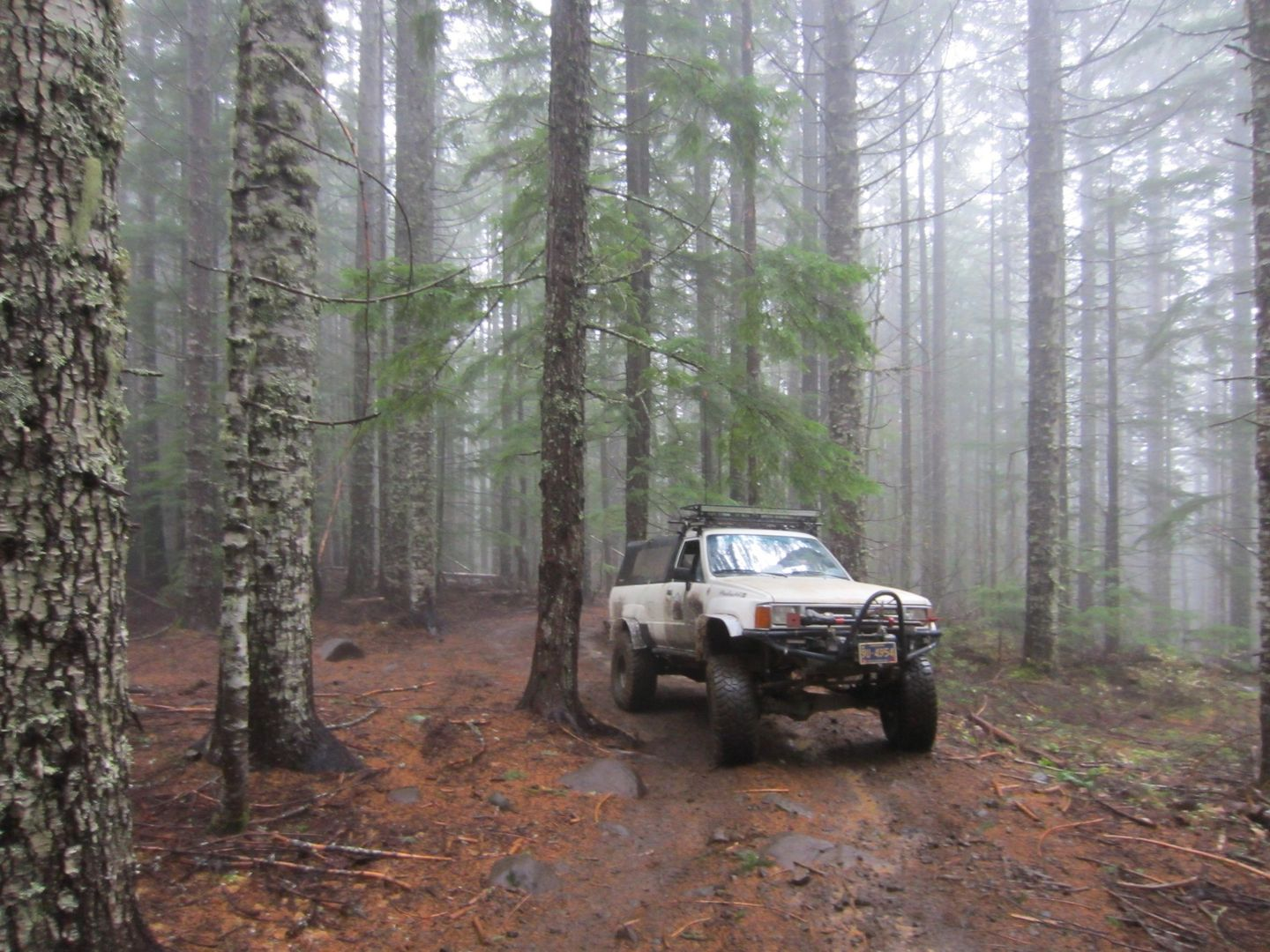 Firebreak Five / Tillamook State Forest - Waypoint 9: Cut Across to Other Path -- Continue Straight