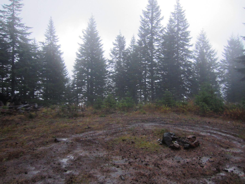 Camping: Cedar Tree / Tillamook State Forest