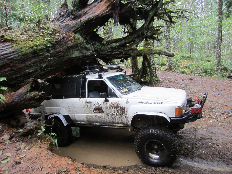 Highlight: Cedar Tree / Tillamook State Forest
