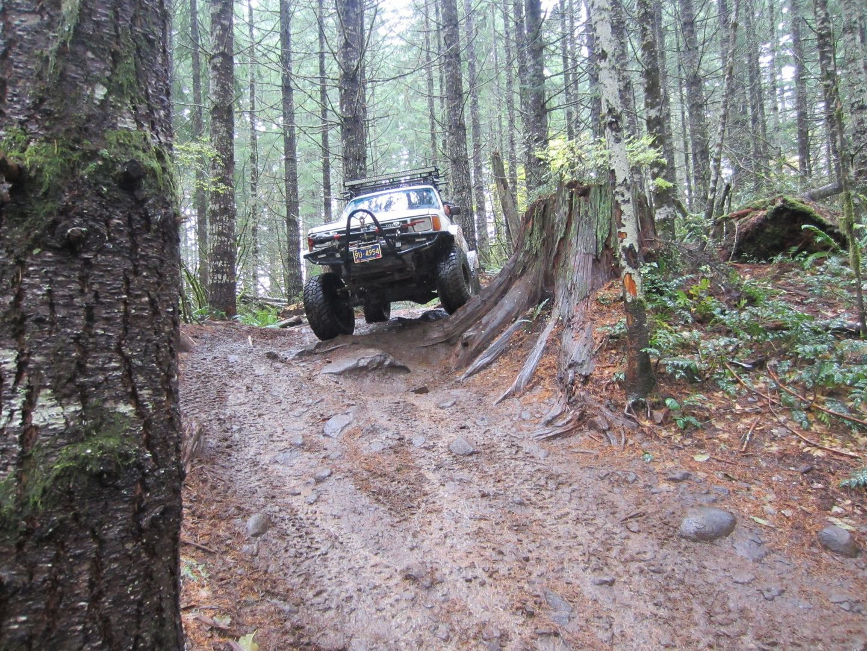 Cedar Tree / Tillamook State Forest - Waypoint 5: Big Stump and Hidden Shelf