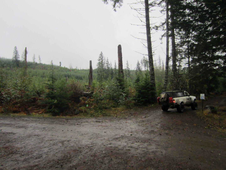 Cedar Tree / Tillamook State Forest - Waypoint 6: Straight Across the Intersection