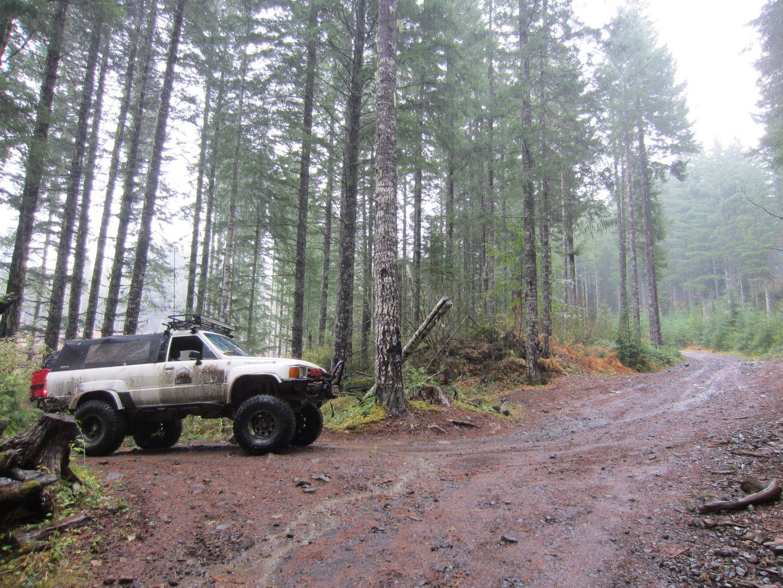 Cedar Tree / Tillamook State Forest - Waypoint 8: Go Left
