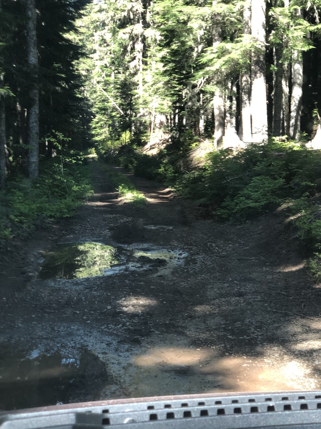 Trail Review: NF-7030 to Stampede Pass