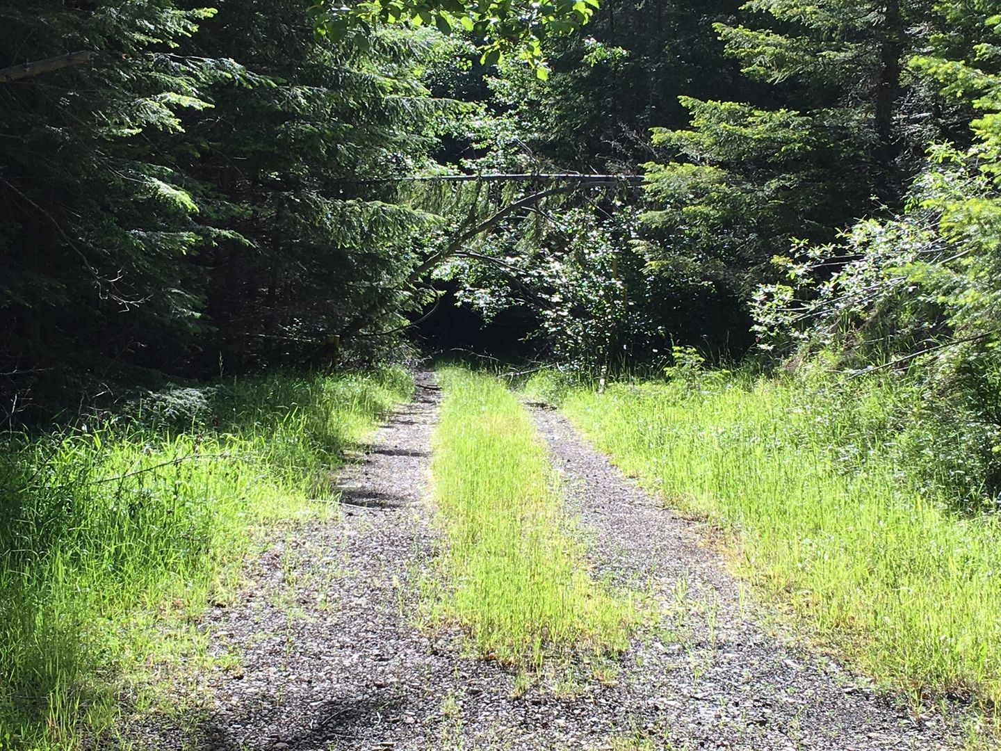 Midnight Creek / NF Road 7010 - Waypoint 6: Trail Intersection / #3154