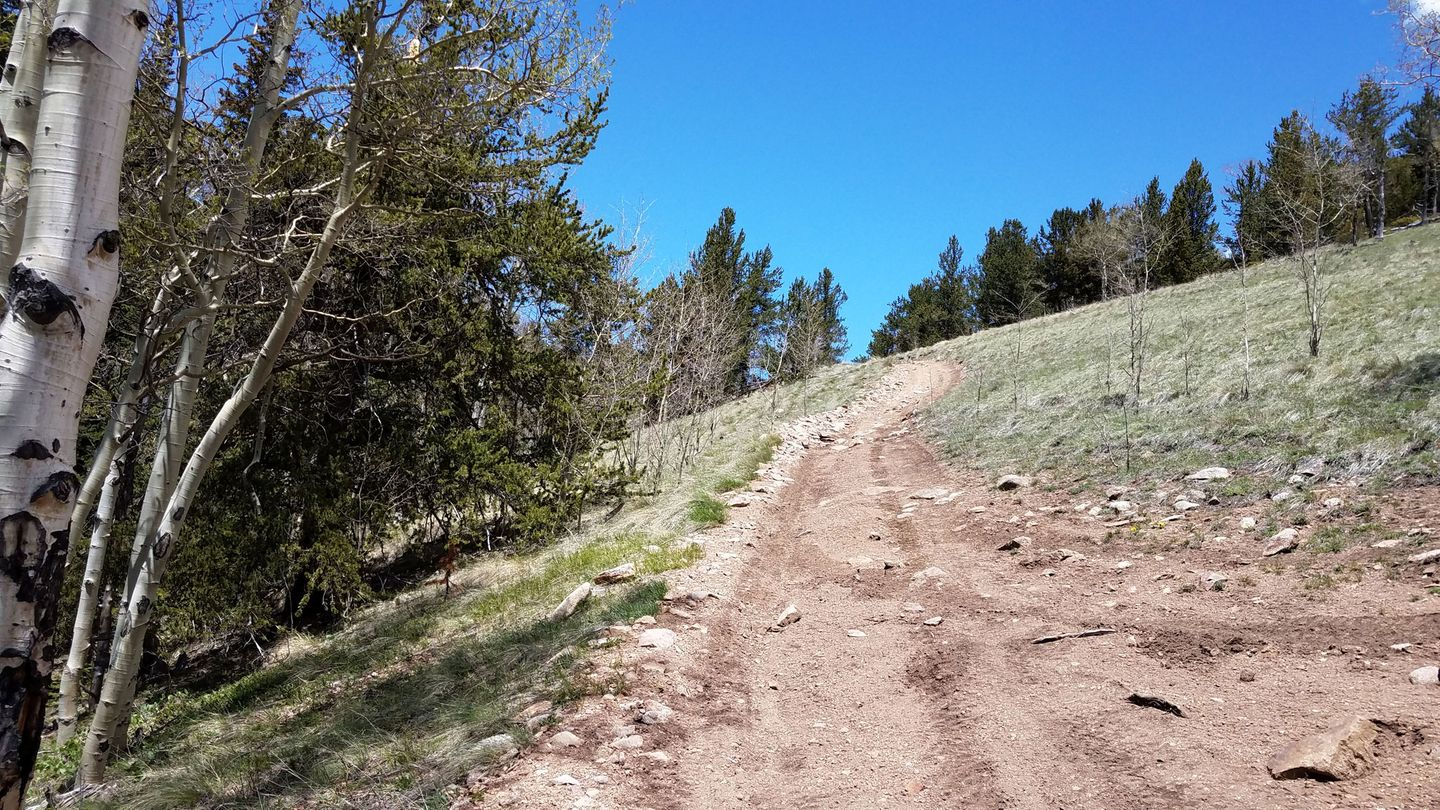 Trail Review: Miller Creek