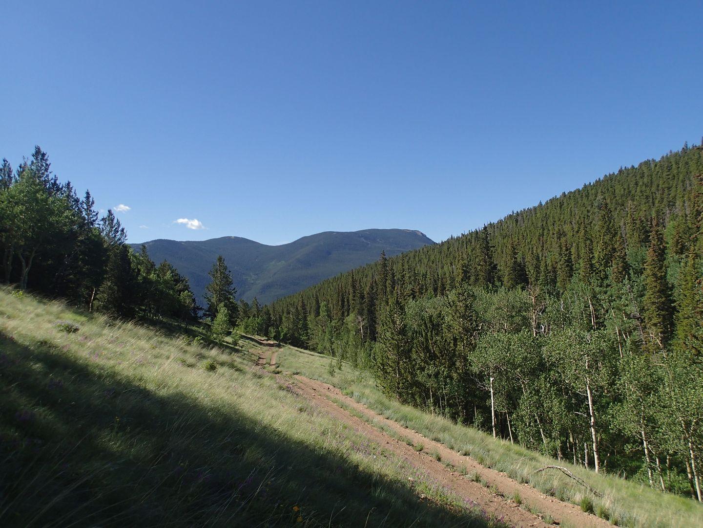 Miller Creek - Waypoint 5: Grassy Area