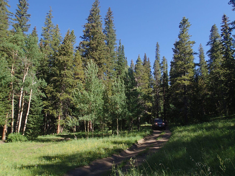 Miller Creek - Waypoint 4: Grassy Area