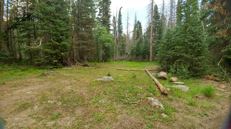 Camping: Ballard Road