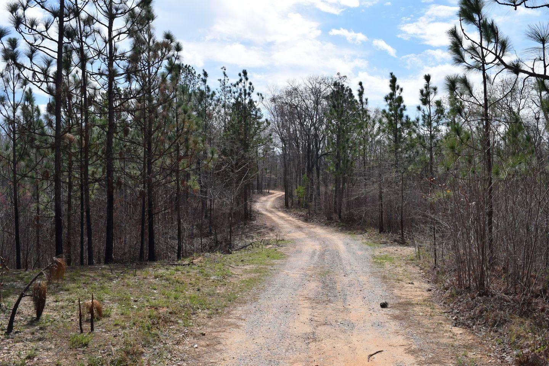 Highlight: Talladega National Forest- 617