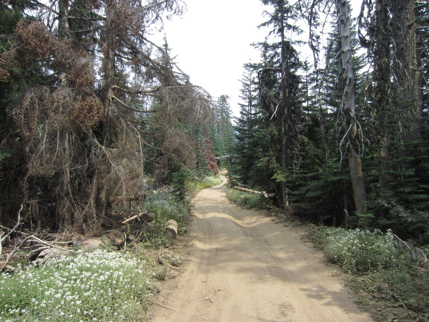 Bennett Pass Road - Waypoint 11: Stay North at Unmarked Trail