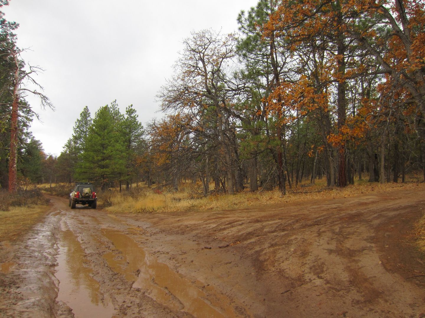 Barlow Trail - Waypoint 4: Continue Straight - End of Old Tractor Road