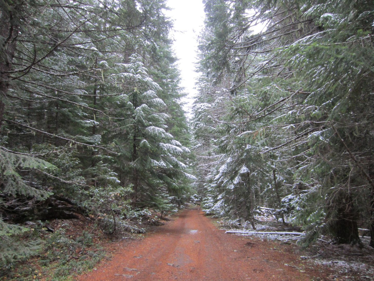 Barlow Trail - Waypoint 41: Continue Straight