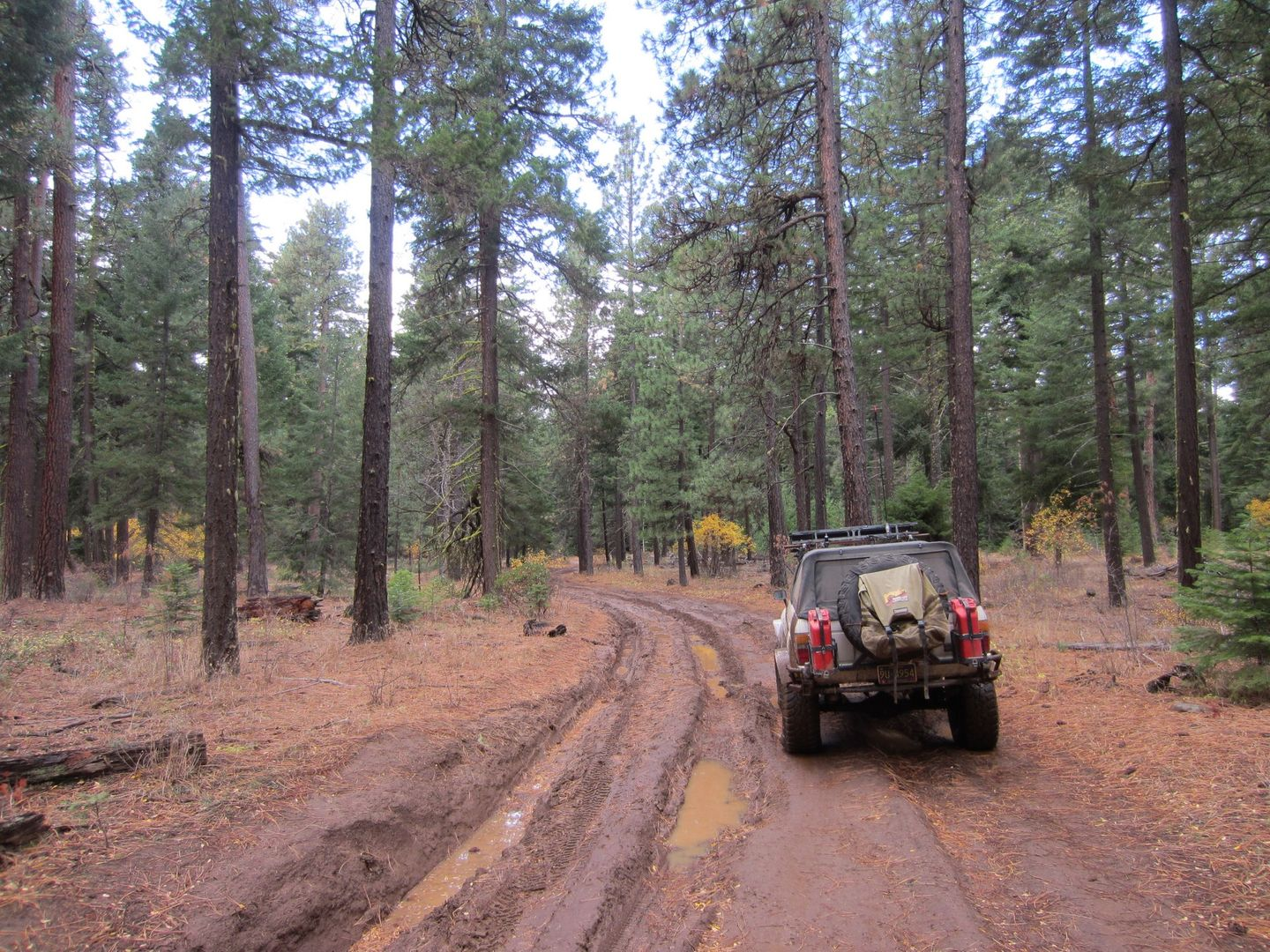 Barlow Trail - Waypoint 7: Rutted Section of Trail