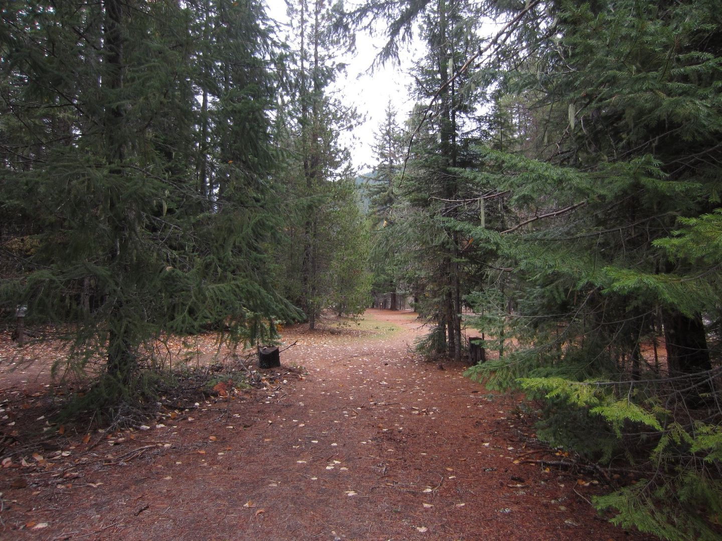 Barlow Trail - Waypoint 27: Campsites on Either Side of Road -- Continue Straight