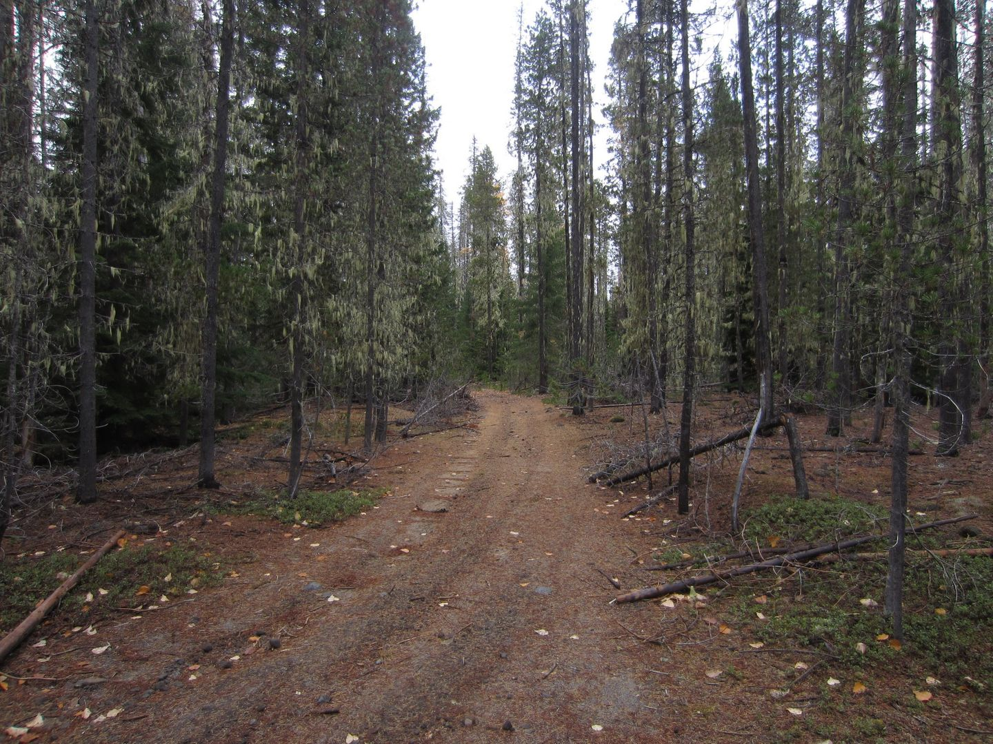 Barlow Trail - Waypoint 34: Continue Straight