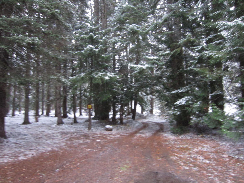 Barlow Trail - Waypoint 44: Go Straight