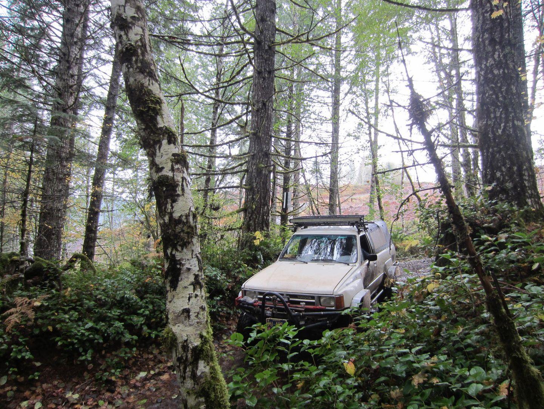 Highlight: Powerline #4C  / Tillamook State Forest