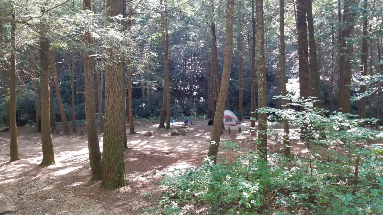 Camping: Corbin Creek Road