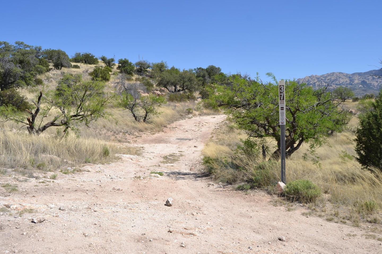 Redington Pass - Waypoint 25: Italian trap FR#37 & Arizona Trail (Stay Left)