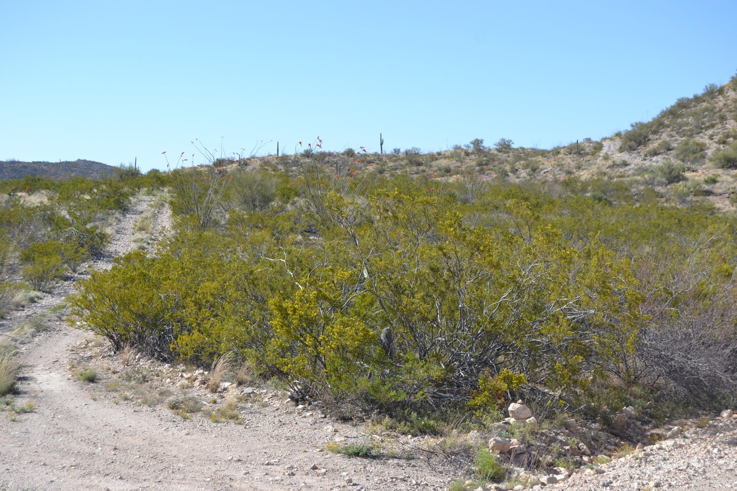 Redington Pass - Waypoint 43: Unknown Rough Hillside Two Track (Stay Right)