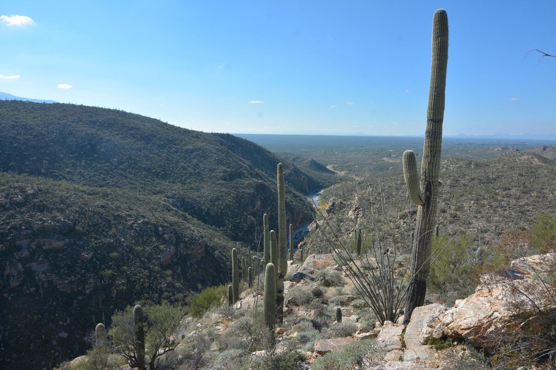 Redington Pass - Waypoint 6: Tanque Verde Falls Overlook Trail (Foot/social)