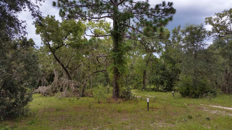Camping: Citrus - Trail 16
