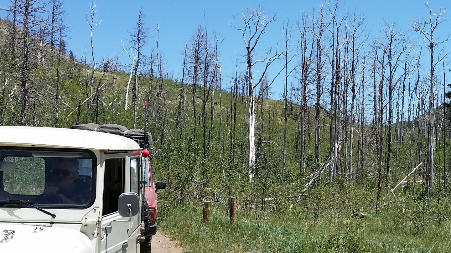 Medano Pass - Waypoint 7: Medano Fire Burn Area