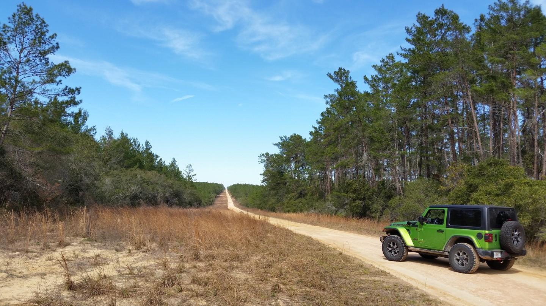 Highlight: Ocala - Forest Road 09