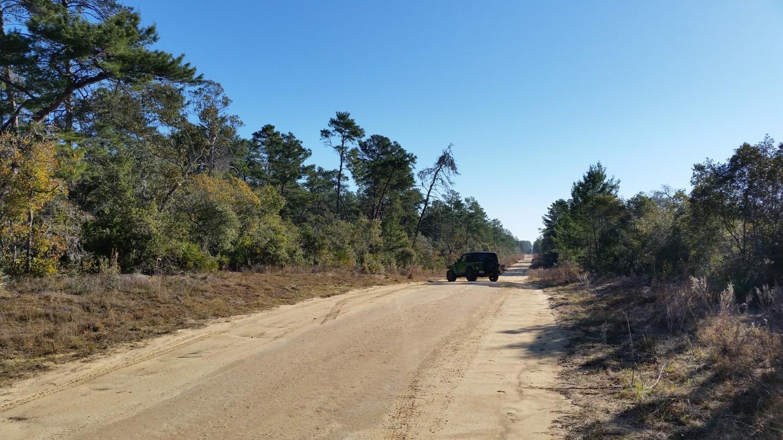 Highlight: Ocala - Forest Road 38