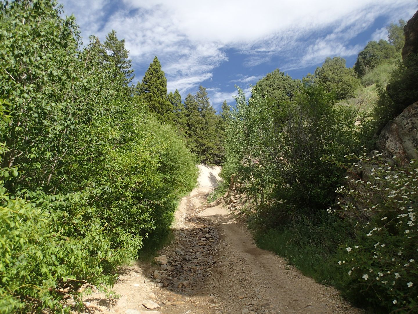 Red Elephant Hill - Waypoint 3: Follow Main Trail NW