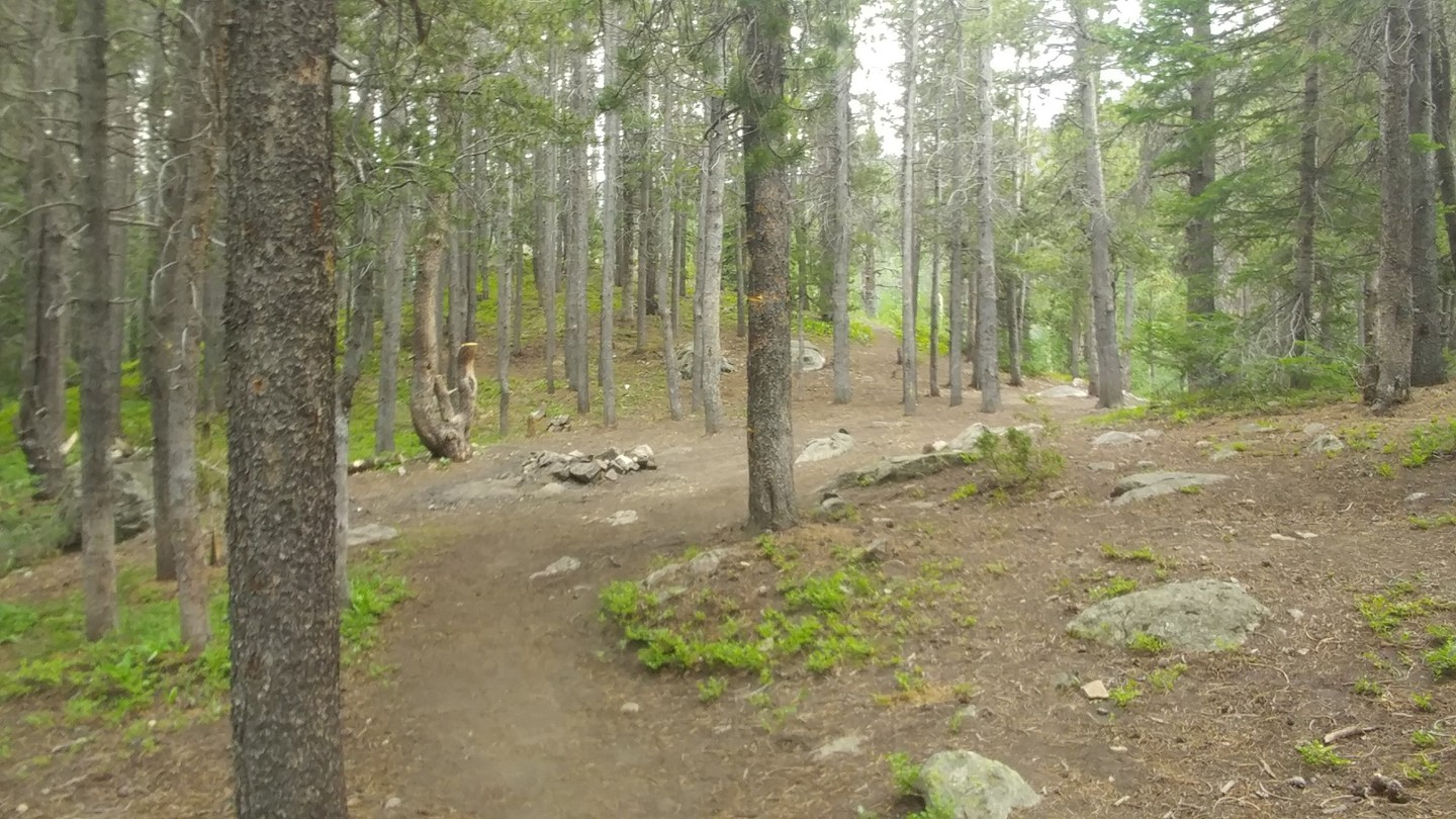 Camping: Rollins Pass East