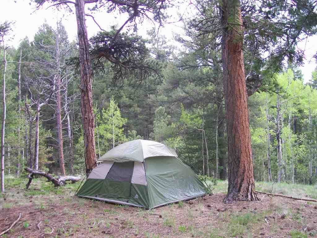 Camping: Bassam Park
