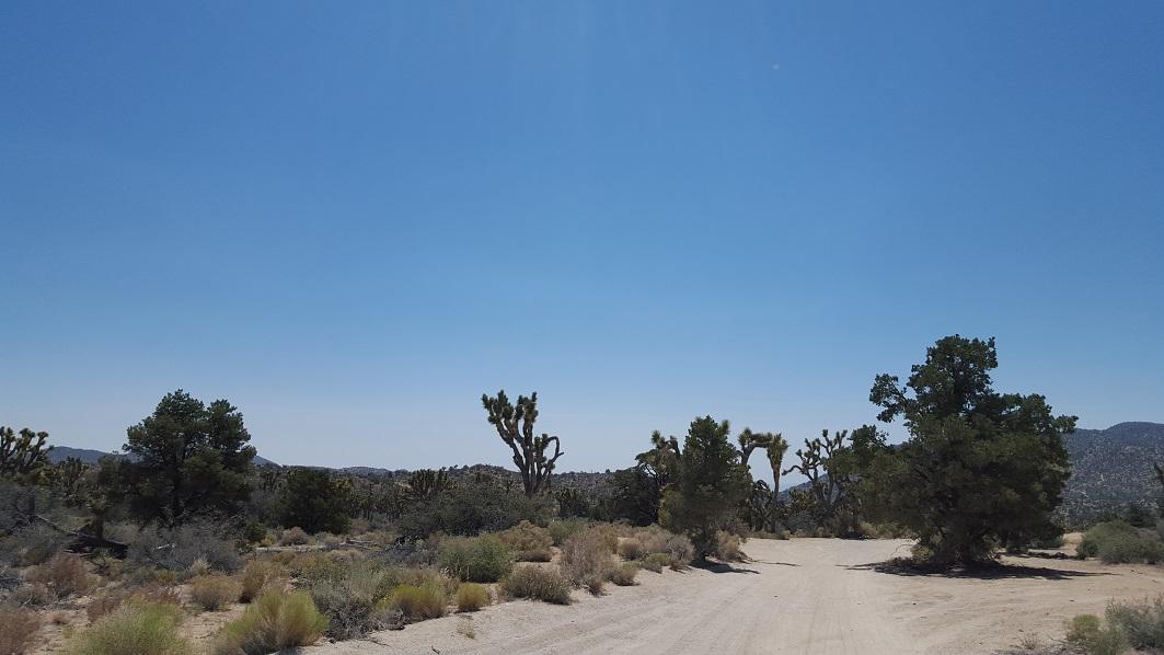 Rattlesnake Canyon - RC3331 - Waypoint 7: Trail End 2N02