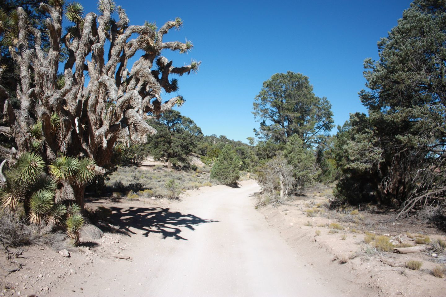 2N02 - Burns Canyon - Waypoint 6: Views From The Trail