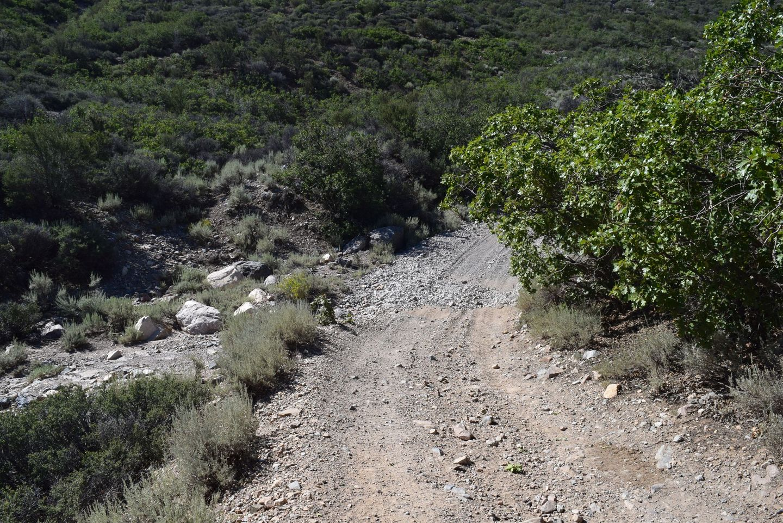 Wheeler Pass - Waypoint 14: Trails Intersect